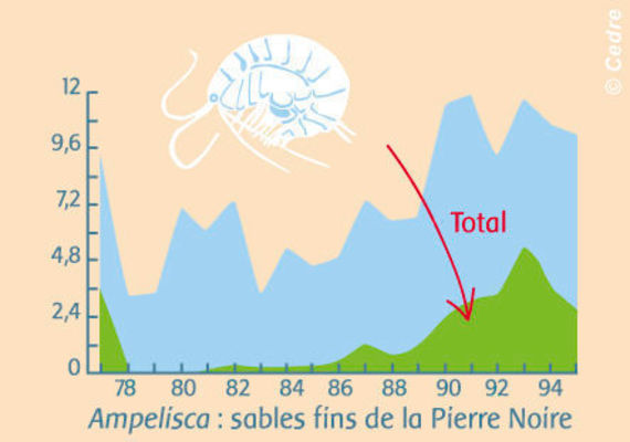 Evolution of the fine sand populations from La Pierre Noire, on the river of Morlaix: Temporary disappearance of sand fleas (Ampelisca)