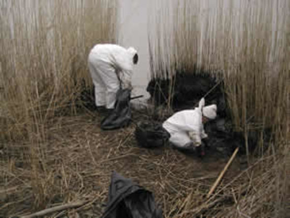 Manual clean-up amongst reeds