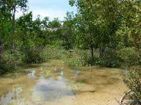 Polluted mangrove (Source: Cedre)