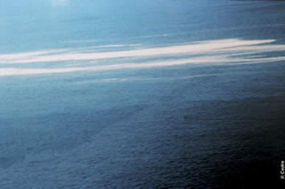 Photo aérienne d'huile de palmiste sur l'eau. Source Cedre.